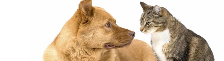 Hond/Kat